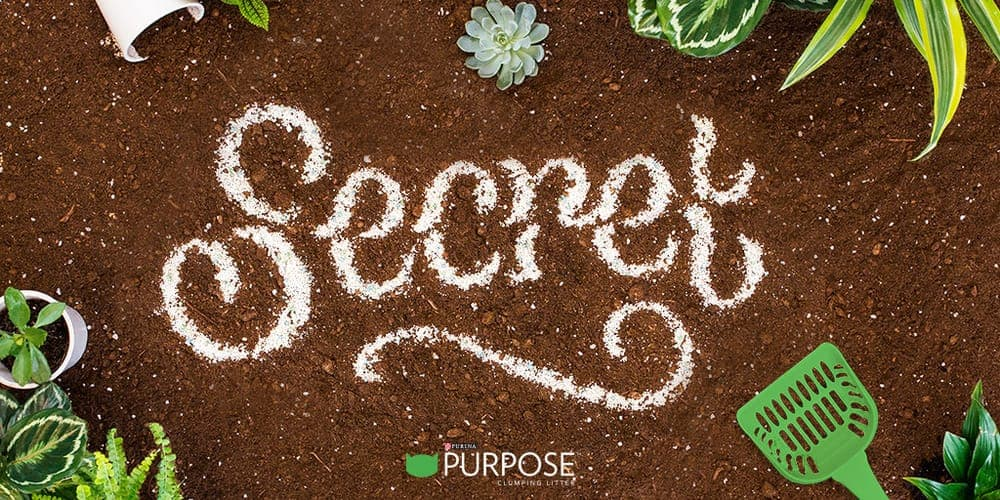 """An image of """"Secret"""" lettering project by Danielle Evans for Purina, an influential female designer."""