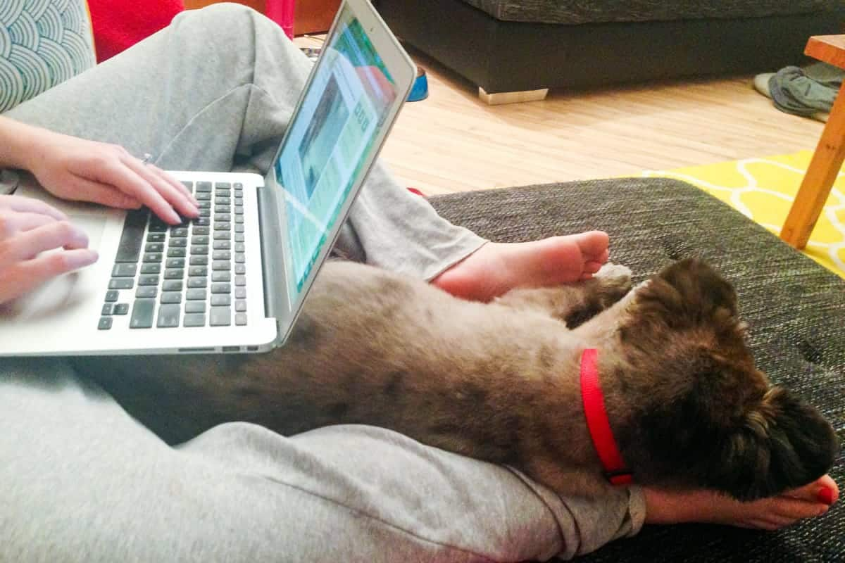 A photo of a puppy sleeping on his owner's leg while she tries to get some work done.