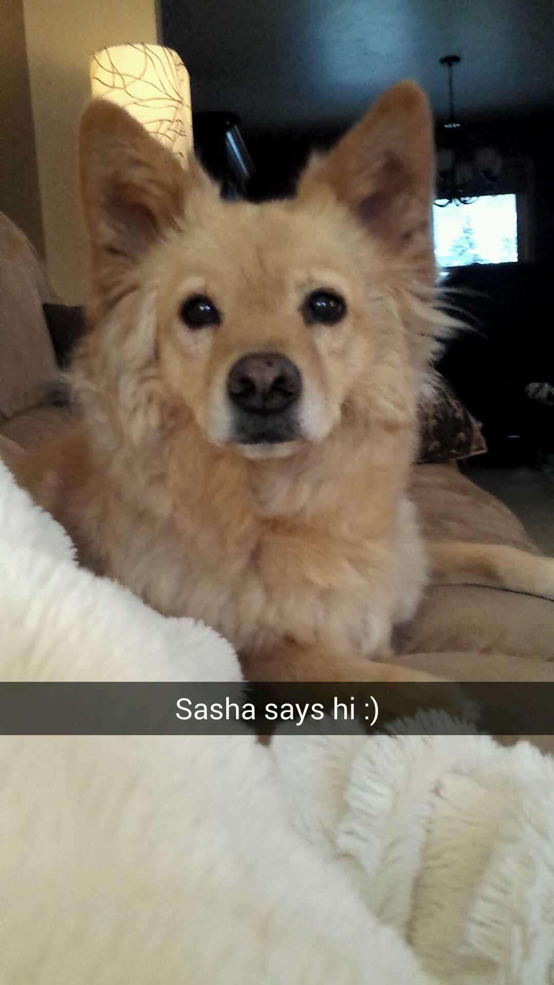 Foap-Sasha