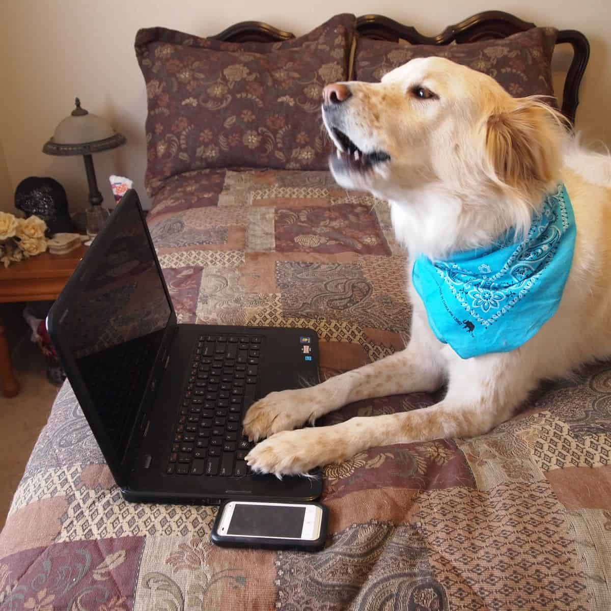 A golden retriever with its paws on the keyboard of a laptop, next to a smartphone. Beta user feedback is an invaluable way to improve your app designs.