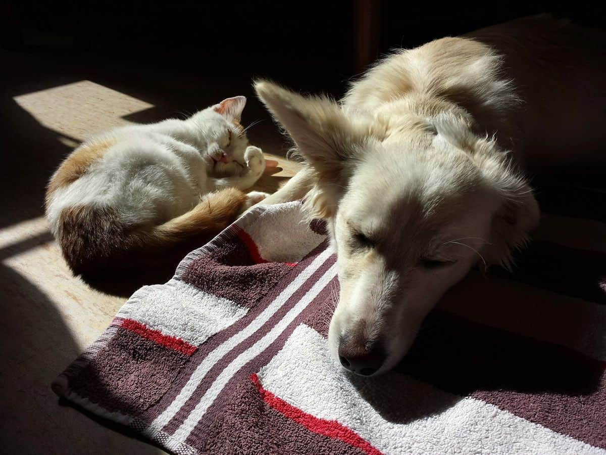 Cat and dog sleeping together peacefully. Trust your mobile app development team and allow them to grow in their roles.