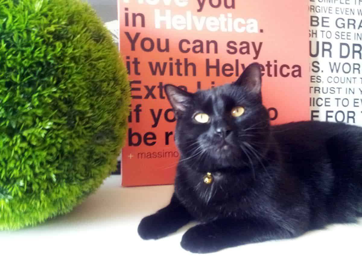 "A black cat sits in front of an orange sign that said ""You can say it with Helvetica"" in Helvetica font."
