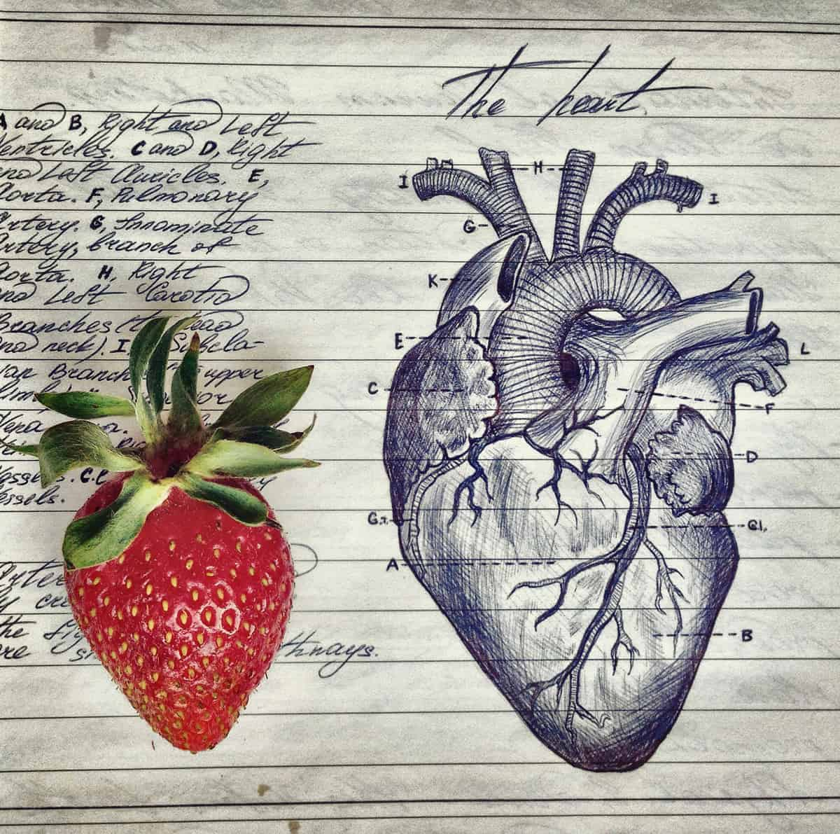 A photo of a large strawberry sitting next to an anatomical drawing of a heart in a biology notebook.
