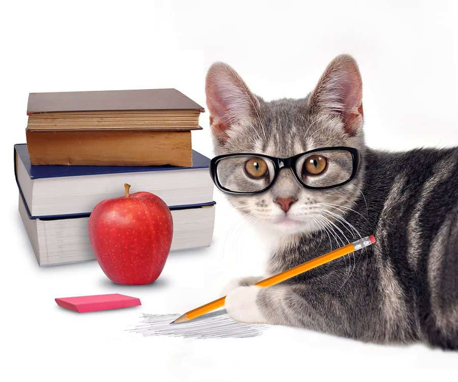 A cat wearing glasses holds a pencil in front of a stack of books and an apple.