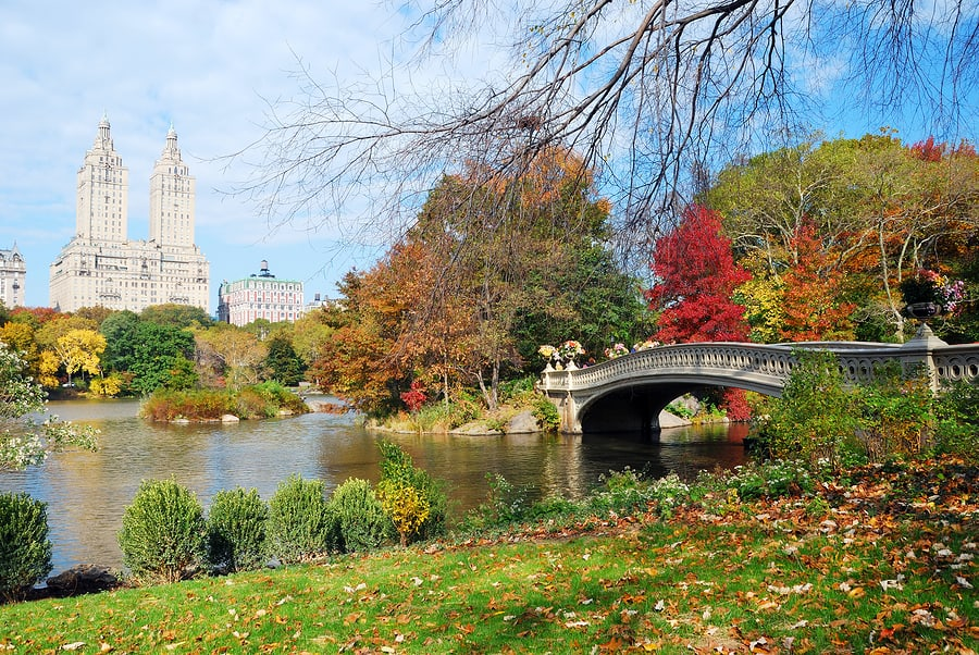 A photo of a bridge in Central Park surrounded by colorful autumn leaves with large buildings in the background.