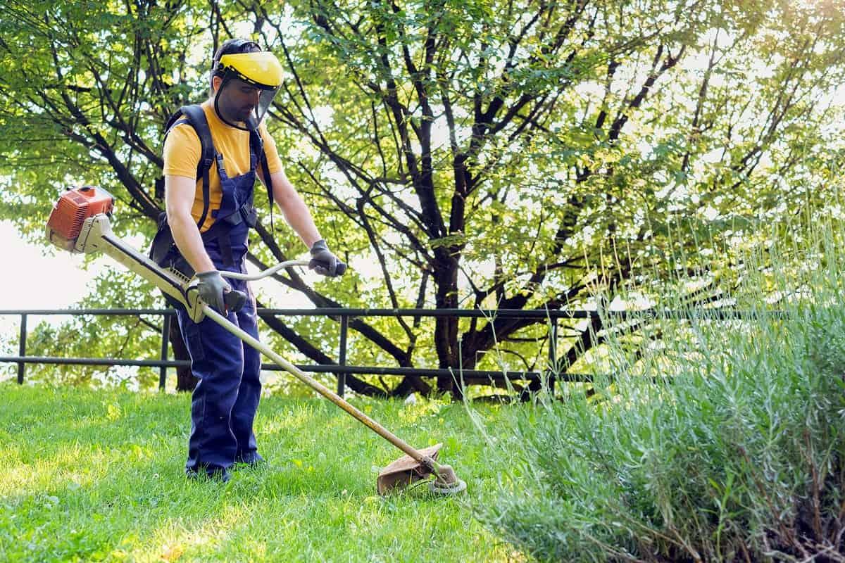 A gardener trims weeds in grass.