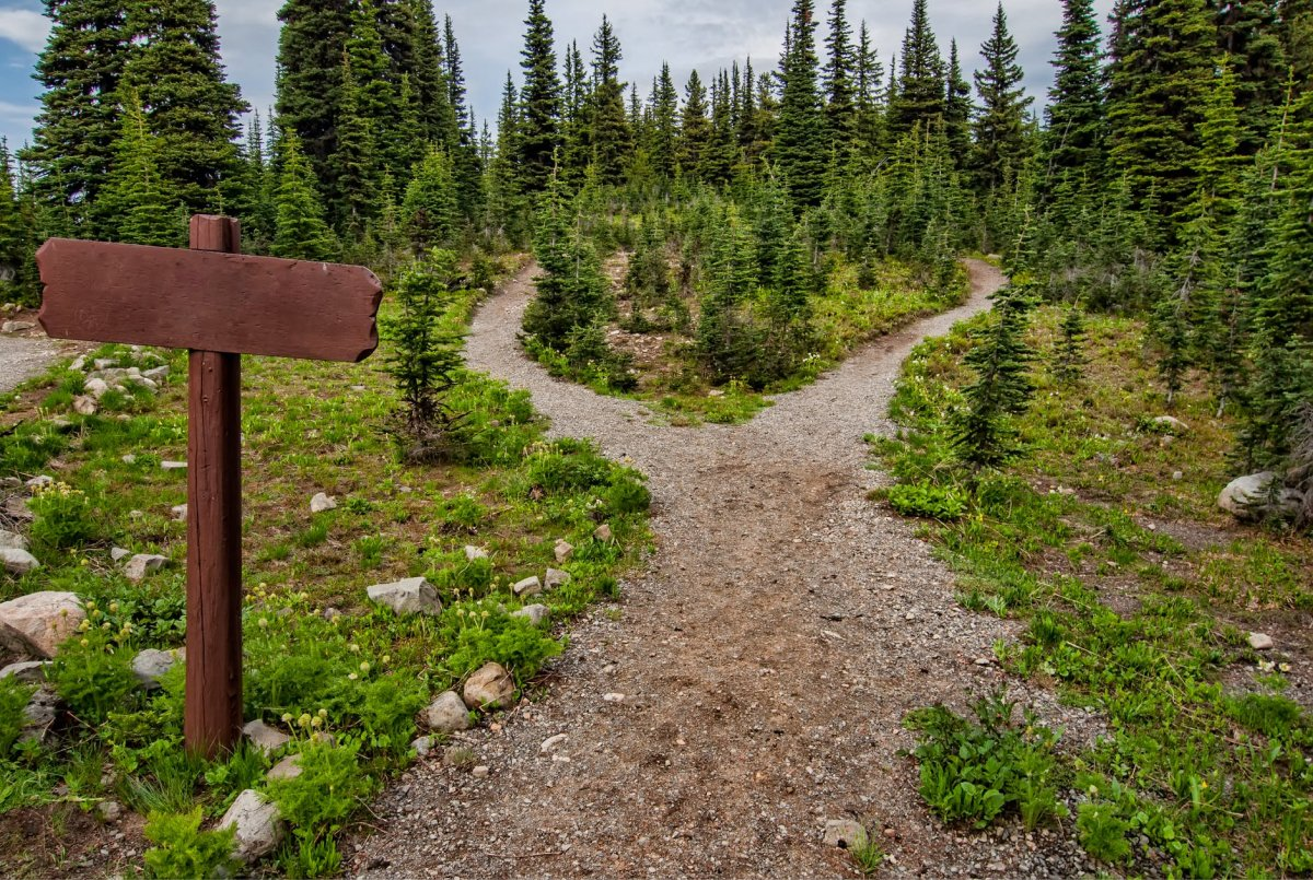 A fork in a trail with a wooden sign.